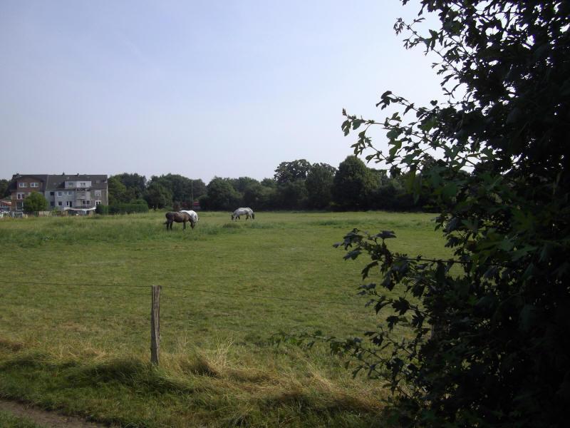 Ponyreiten niederrhein