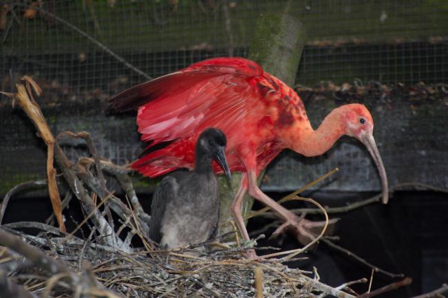 vogel langer schnabel